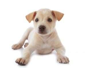 Descargar bonitas frases sobre el amor a los animales, las mejores frases sobre el amor hacia los animales para descargar