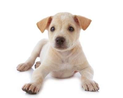 Nuevas Frases Sobre El Amor A Los Animales