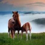 Descargar frases bonitas de amor para los animales, descargar las mejores frases cariñosas para los animales
