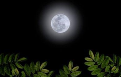descargar frases bonitas de buenas noches para mi enamorada, las màs bonitas frases de buenas noches para mi enamorada