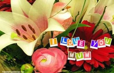Buscar los mejores textos para el Día de la Madre