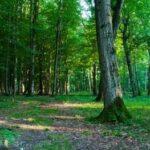 nuevos mensajes de reflexión sobre el medio ambiente, bonitos mensajes de reflexión sobre el medio ambiente