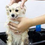 descargar mensajes de admiración para quien ama las mascotas, nuevas palabras de admiración para quien ama las mascotas