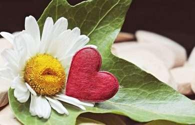 Buscar bellas palabras de amistad para compartir en Facebook
