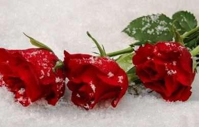 Buscar bonitos y originales saludos para enviar el día de la Madre por Whatsapp